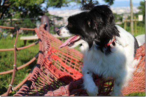 犬(パピヨン) EF-Mで撮影