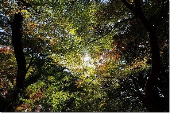 紅葉を超広角レンズで撮影