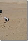 NIKON1 J1で犬が走るのを連写で撮る!