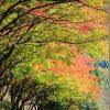 紅葉を綺麗に撮ってみよう! TAMRON 28-75mm(A09)