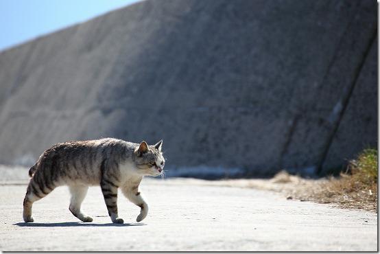 猫を撮ってみました! TAMRON 70-300mm VC
