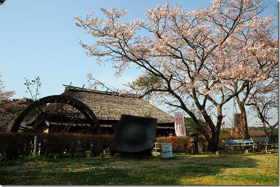 桜の写真 難しいですね? 綺麗に撮れますか?
