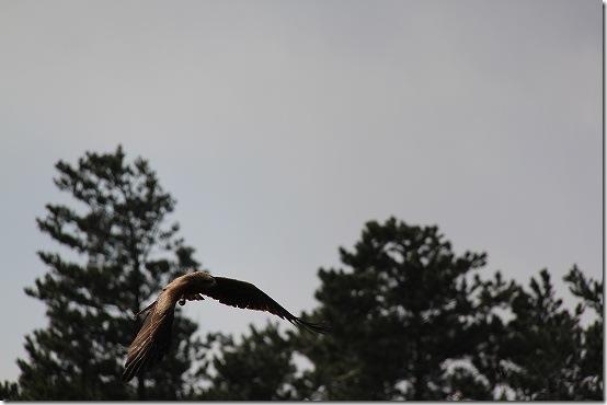 EOS60DのAIサーボで鳥を撮ってみました!