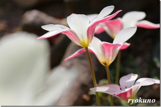 花の写真を綺麗に撮ってみよう!! マクロレンズで