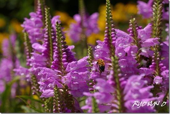 キノコとお花の写真(PENTAX K100D)