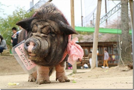 EOS M3で豚