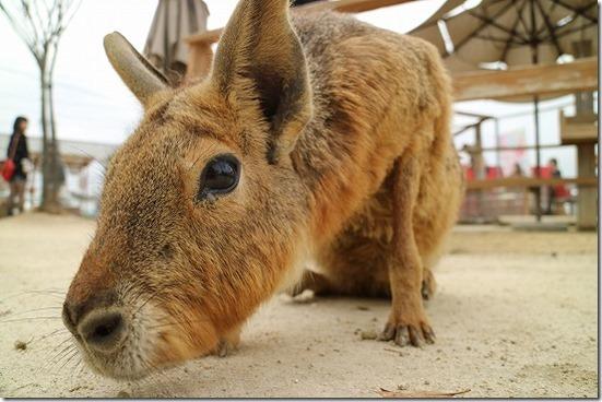 EOS M3で鹿ネズミ