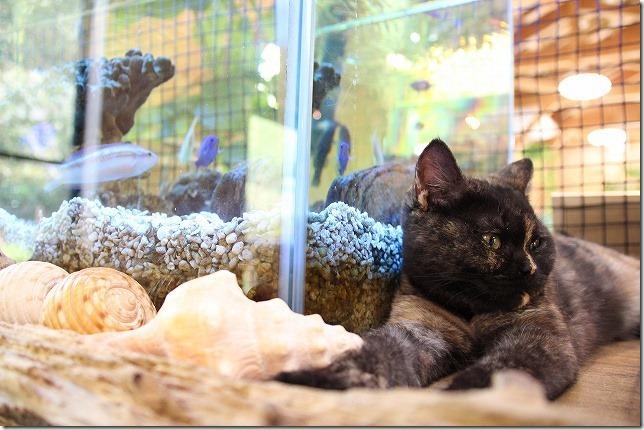 猫と水槽の魚