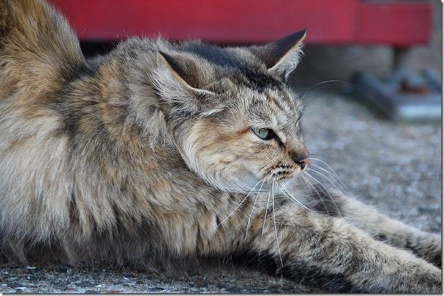 SIGMA 18-300mmで猫を撮ってみた
