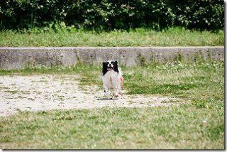 DMC-G7 と 14-140mmのAF性能(走る犬)