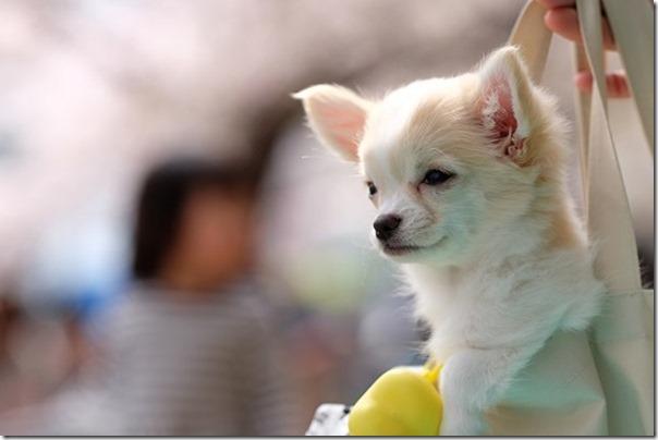 XF90mmで子犬を撮る
