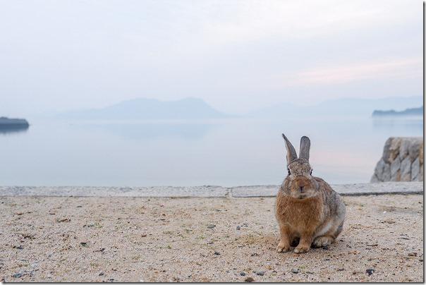 大久野島のうさぎと海の写真