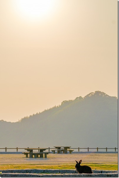 大久野島のうさぎと夕日の写真
