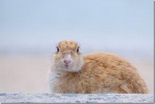 うさぎを可愛く写真に撮る(広島 大久野島のうさぎ達)