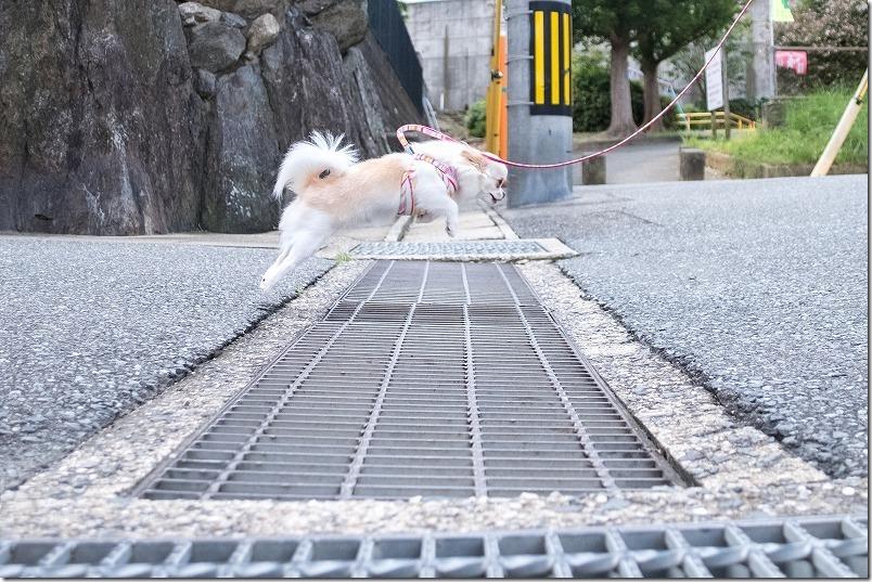 X-T2とSIGMA18-200mmで犬のジャンプの瞬間を連射で撮影