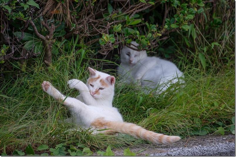 福浜海岸・伊崎漁港で遊ぶ猫