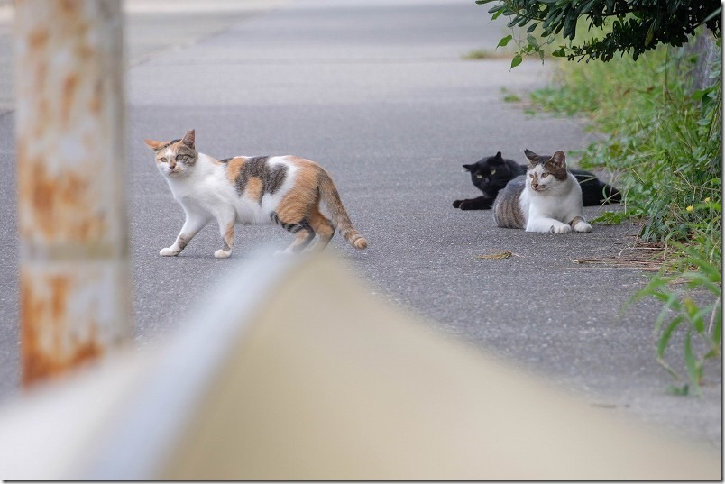 福浜海岸・伊崎漁港で顔見の猫