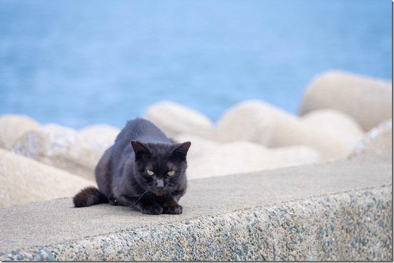 福浜海岸・伊崎漁港の黒猫