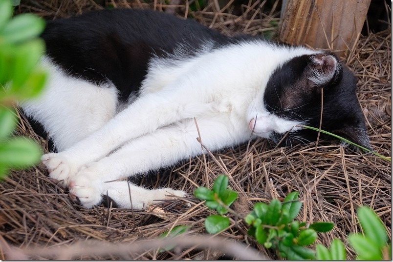 福浜海岸・伊崎漁港で白黒の猫